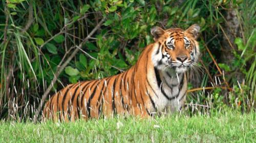 Sundarban con tinies